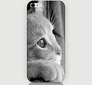 White Cat Pattern Case Back Cover for Phone6 Case