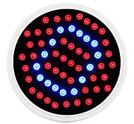 MORSEN 5 - (W) - красный/синий - 60 V)