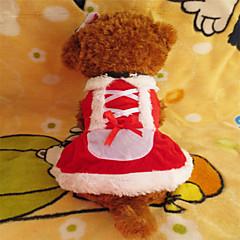 Koirat Hameet Punainen Talvi Joulu Joulu